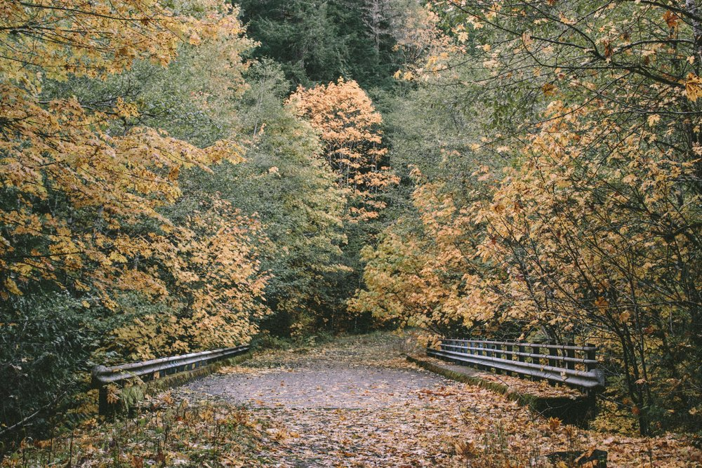 EC_FALL_OREGON-9900.jpg