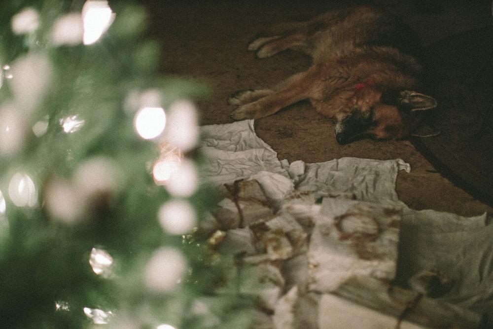 EC_WINTER CHRISTMAS-6906.jpg