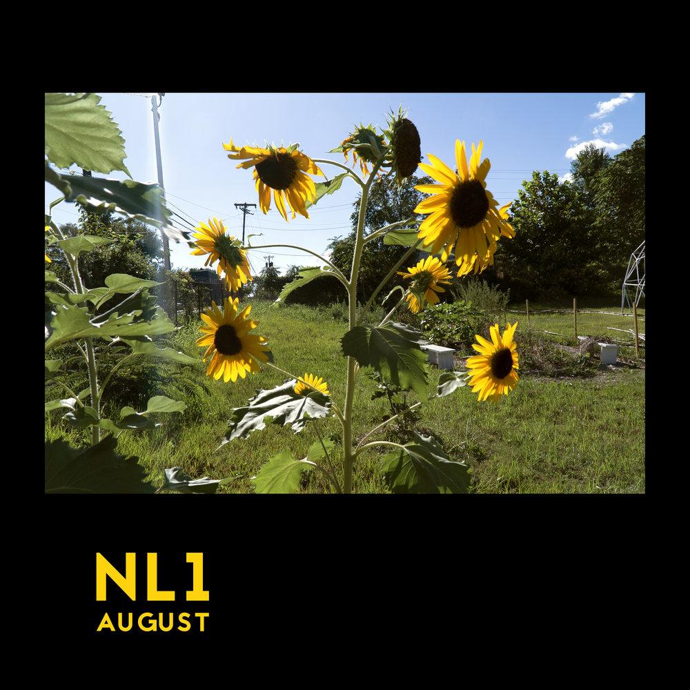 august_nl1.jpg