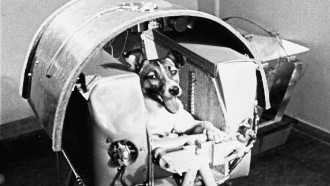 on-this-day-laika-the-dog-makes-space-history-136401421443103901-151103001005.jpg