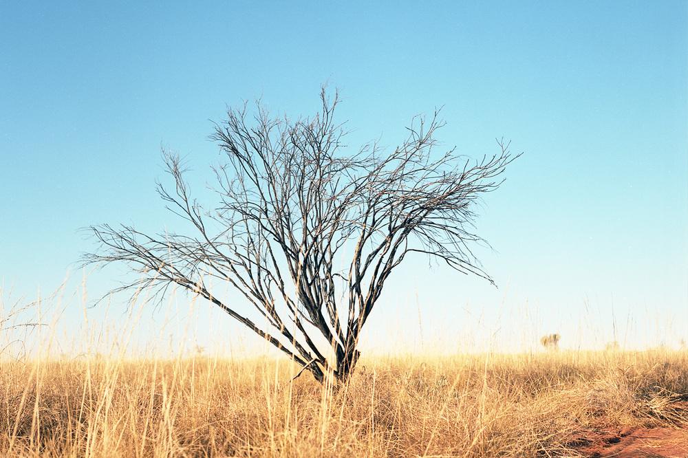 willowra4.jpg