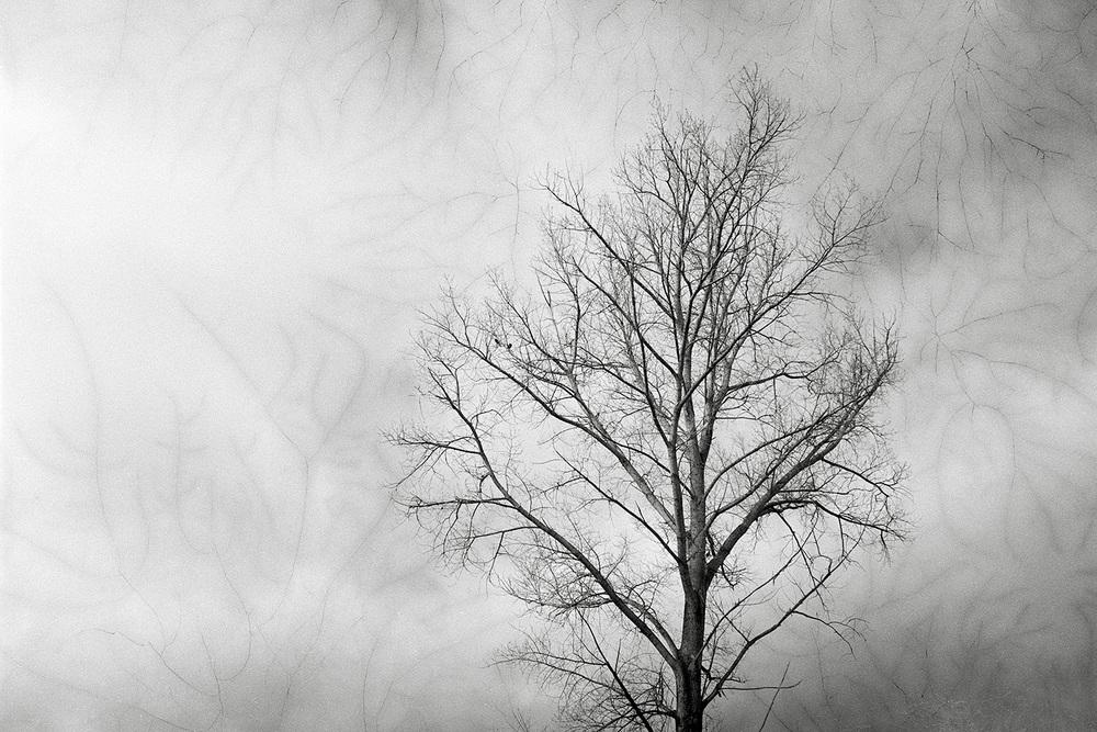 tree66.jpg