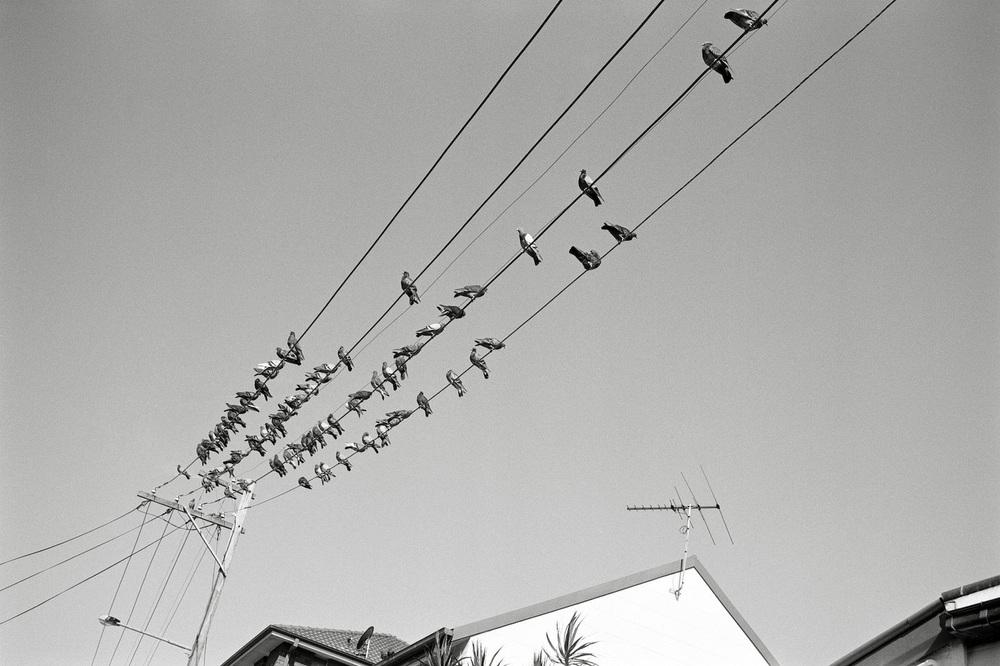 birdsonthewire.jpg