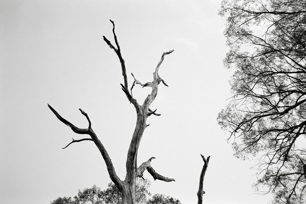 treeA2.jpg