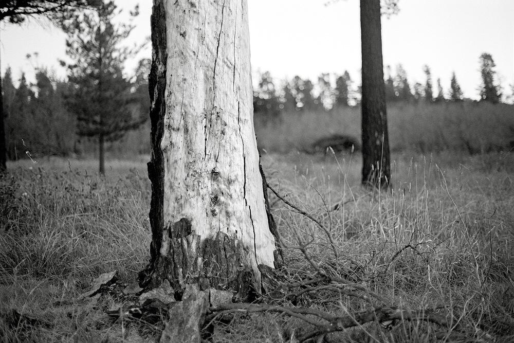 TREE221.jpg