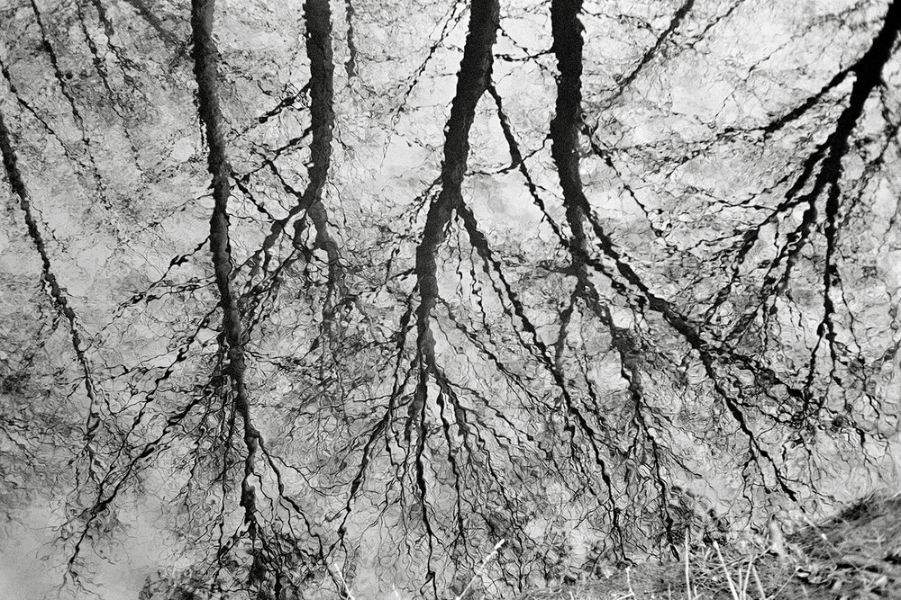 reflections88.jpg