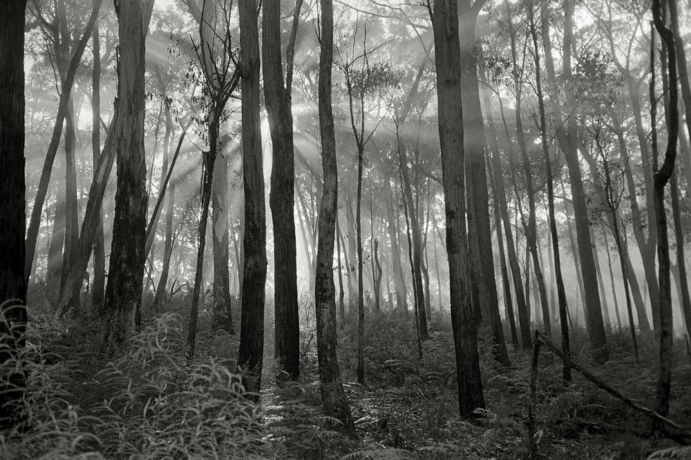 trees45.jpg