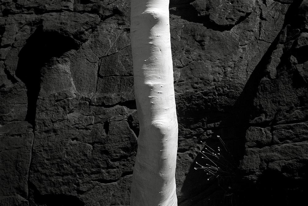 nude-tree.jpg