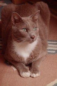 187_gray-cat.jpg