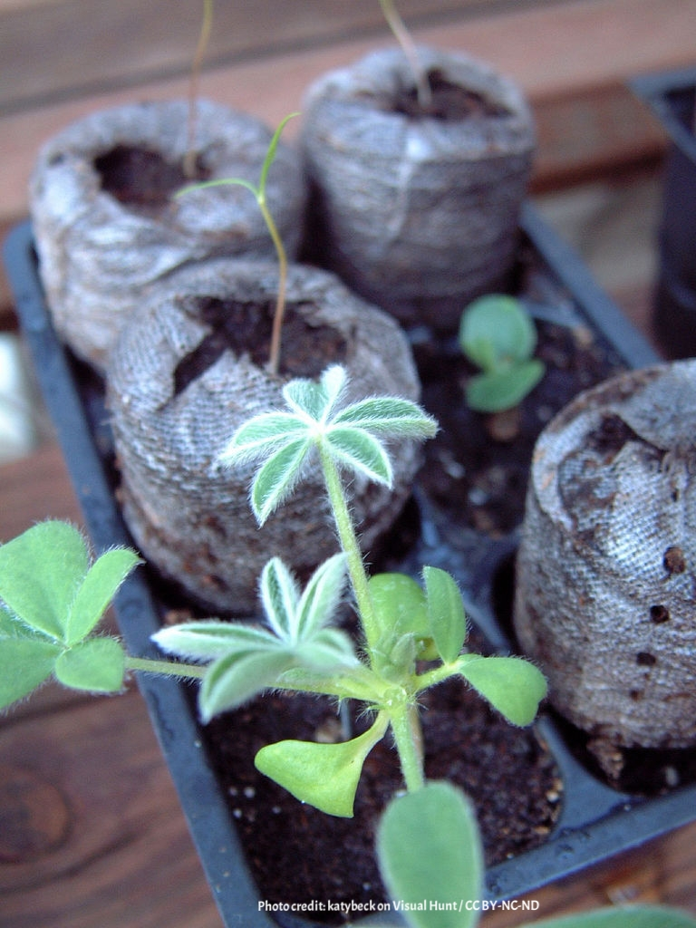 make your container garden thrive 2