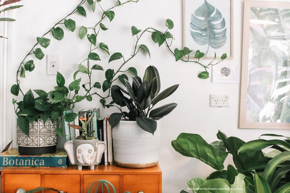 tips to bring nature indoors 1