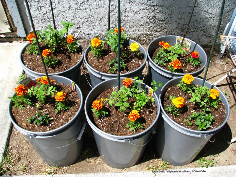 container gardening, how to do it