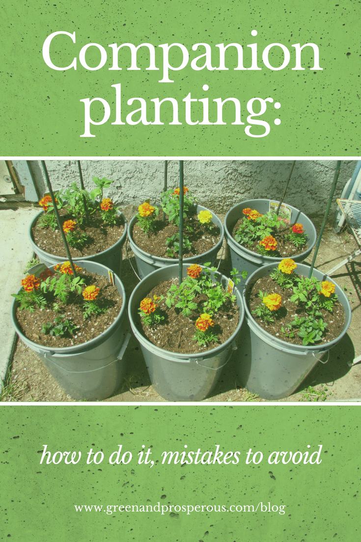 companion planting, how to do it