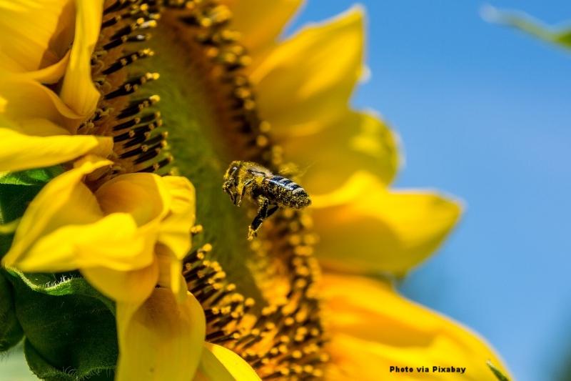 prepare your bee-attracting garden for winter