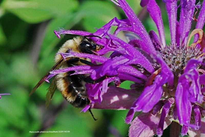 preparing your bee-attracting garden for winter
