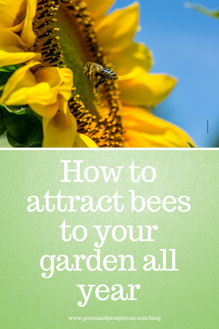 how to attract bees to your garden all year