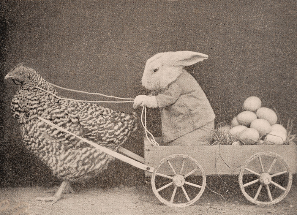 A clever & efficient Bunny