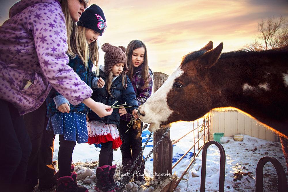 kids feeding horse