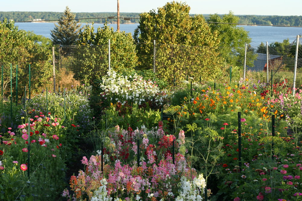 Foundations for Growing Cut Flowers with Kathleen Murphy