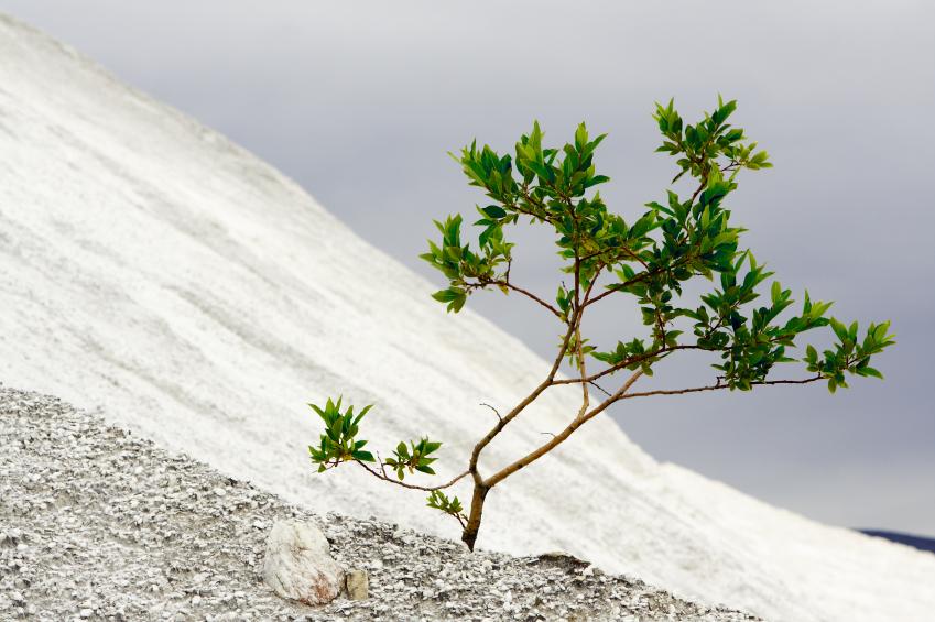 Tree in desert.jpg