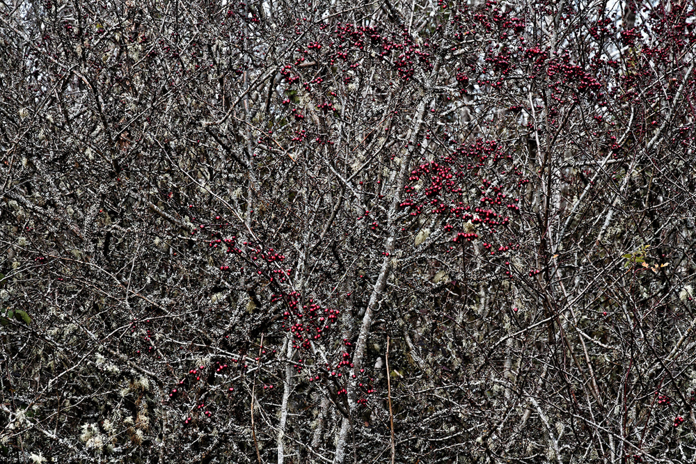 Berries, Homage a Jackson Pollock