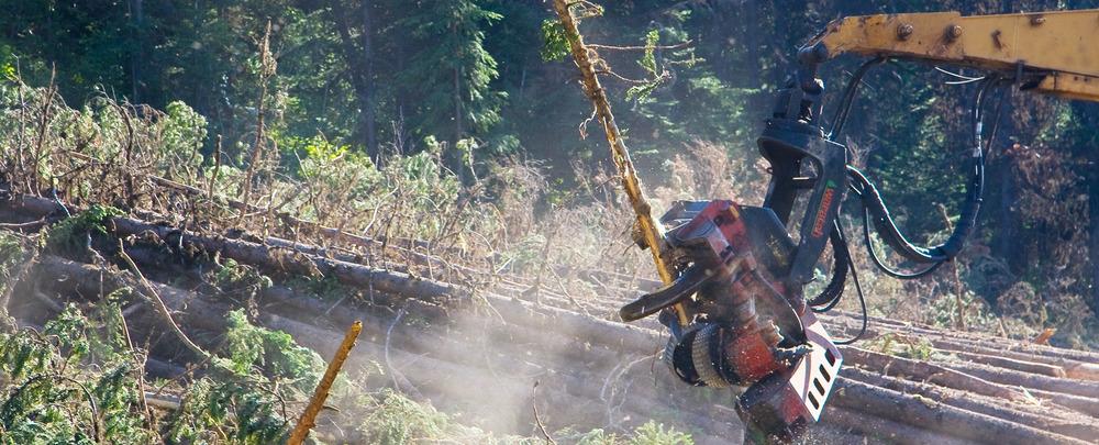 Forestry Valemount B.C Canada