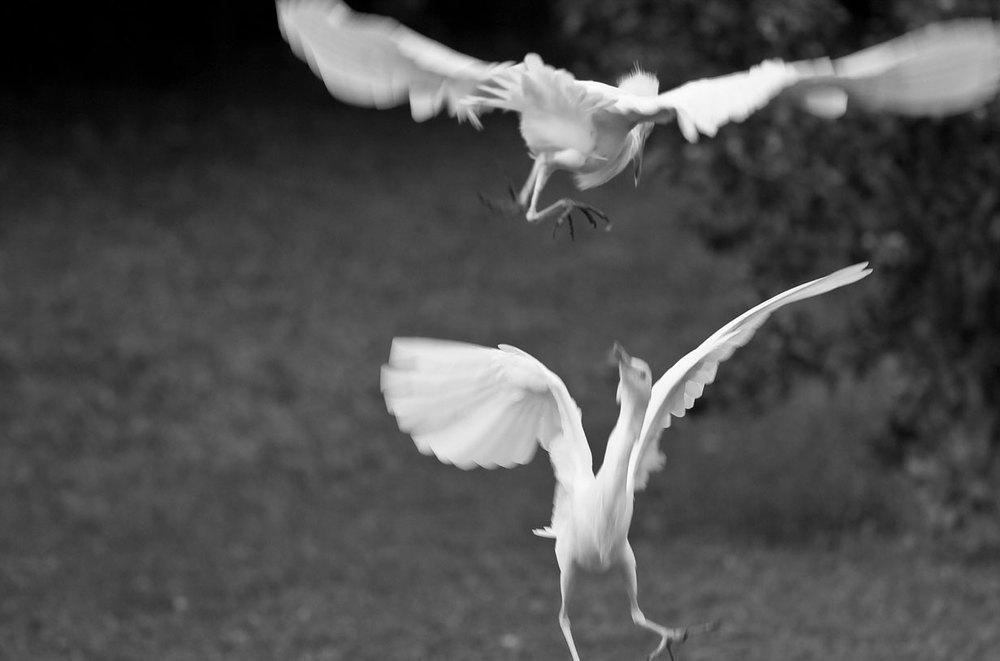 Bbirds.jpg