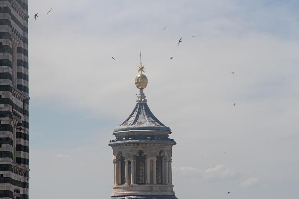 Swallows, Duomo, Sienna