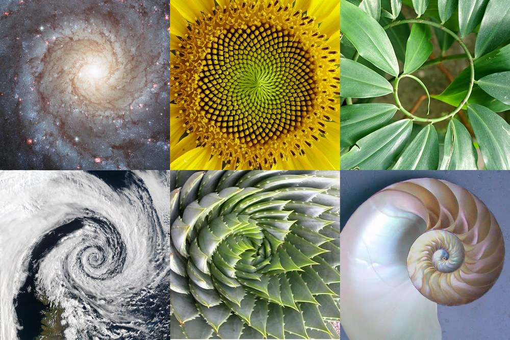 the golden ratio in nature The 'golden ratio' is an inherent design aspect of the universe found in nature, the clock cycle of brainwaves and eve the human genome dna.