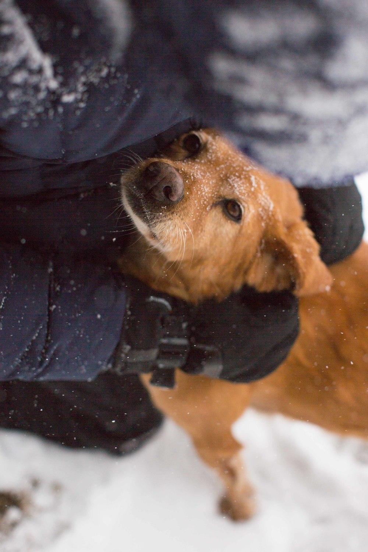 winter walk march 2014-048.jpg