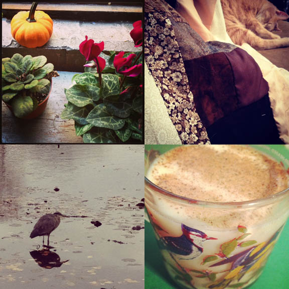 1) Lovely windowsill at work. Still time for pumpkins! 2) Now that the weather is cold, I can snuggle up under the quilt I'm working on with Tom. 3) The heron at Green-Wood Cemetery is looking a little chilly. 4) First eggnog of the season in my Grandfather's bird mug.