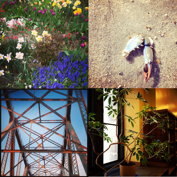 1) The most manicured flower patch in Prospect Heights. 2) Lost limb at Sandy Hook, NJ. 3) Magic hour on the Outer Bridge Crossing. 4) A golden life at the Library.