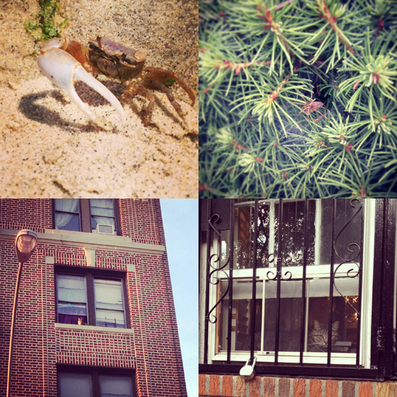 1) Crabby crab on Sandy Hook in NJ. 2) Sneaky spider in Asbury Park. 3) Daredevil watcher in Park Slope, Brooklyn. 4) Safe and sound at home in South Slope.