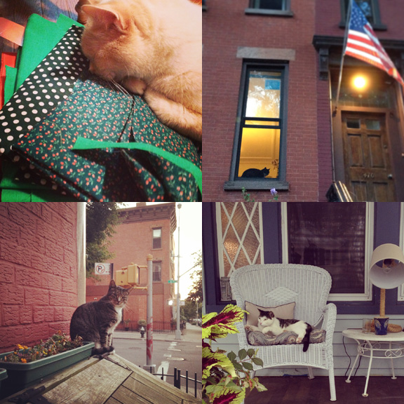 1) Pit is really concentrating on my next quilt. 2) Patriotic watcher. 3) I found out that the 11th Street cat's name is Tiger. She was less than thrilled that I was taking her picture. 4) Beach cats have it best.
