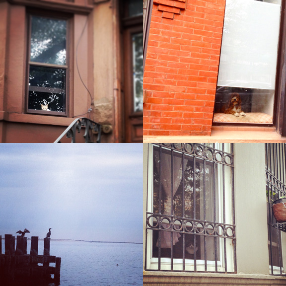 1) A watcher waits on 6th Ave. 2) Watcher dog in North Park Slope. 3) Cormorants in Coney Island. 4) Hidden in plain sight on 15th St.