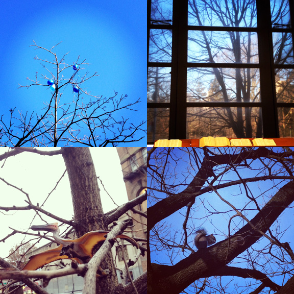 1) Festive Winter skies. 2) Library scenes. 3) Not your usual nester. 4) Squirrel brunch.