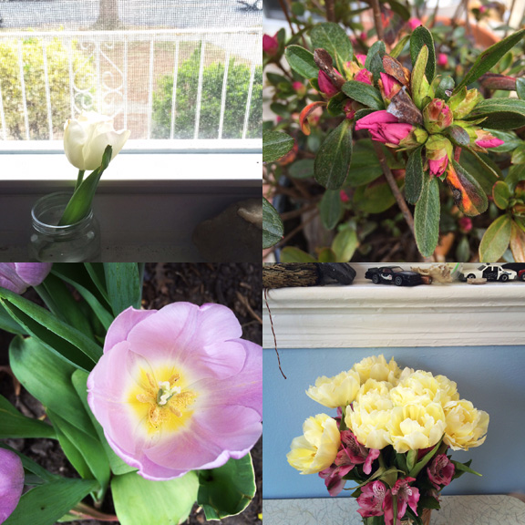 1) A broken bud comes inside. 2) An expected azalea. 3) Yard blooms. 4) Party Leftovers.