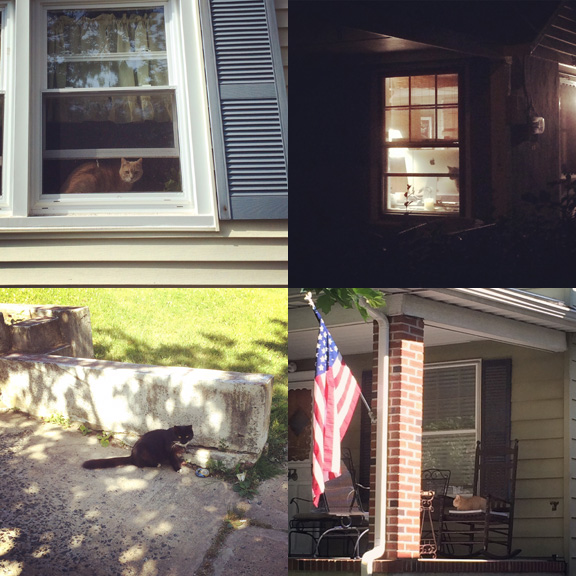 1) Tom as #watchercat. 2) Watcher in the dark. 3) Neighbor. 4) All american #porchcat.