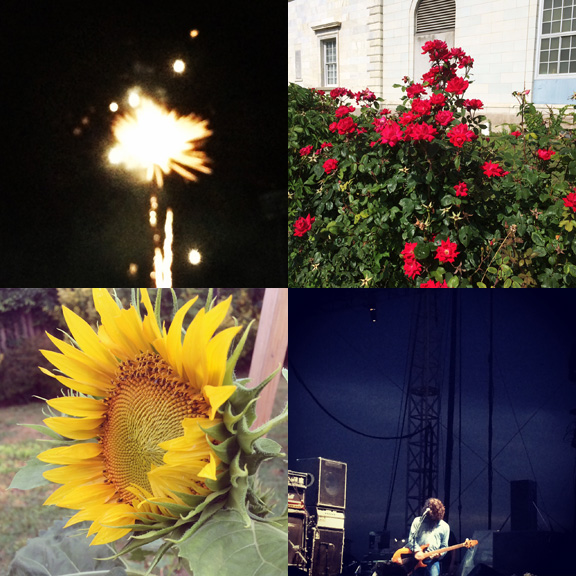 1) Local fireworks. 2) Local roses. 3) Backyard surprises. 4) Favorite sights.