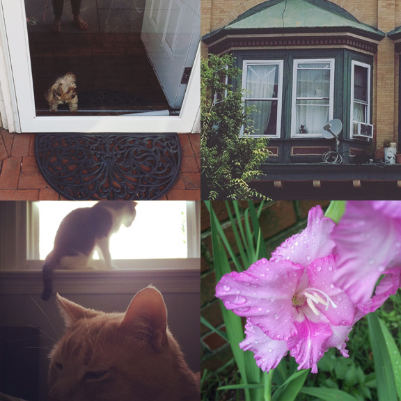 1) Shopdog in Red Bank. 2) Watchercat in Asbury Park. 3) Cats at home. 4) Front yard friends.