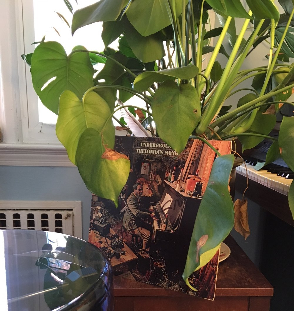 We bought a record player, but the house plants still the show.