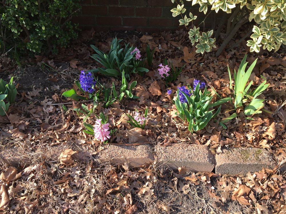 My front beds were starting to bloom at the beginning of the month.