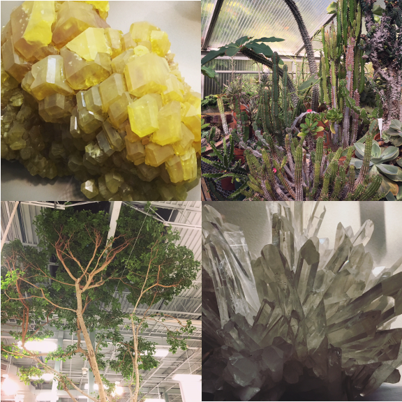 1) Sulfer. 2) Cacti. 3) Supermarket Tree. 4) Quartz.