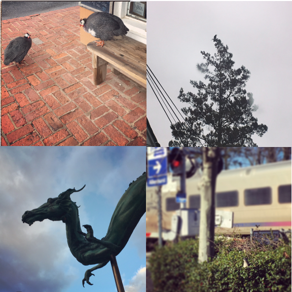 1) Breakfast mates in Allenwood NJ. 2) My favorite pine tree, Asbury Park NJ. 3) Sky dragon, Philadelphia PA. 4) Mocking bird waiting for the morning train, Allenhurst, NJ.