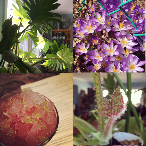 1) Plant light. 2) Bee haven. 3) All the lime zest. 4) New growth.