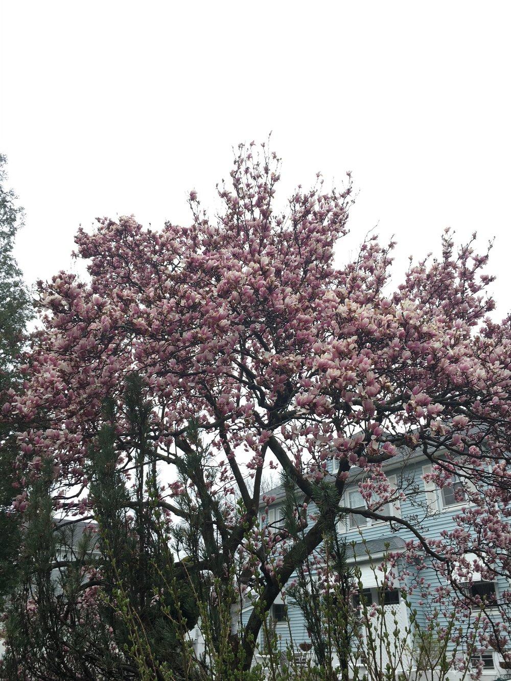 Same tree...