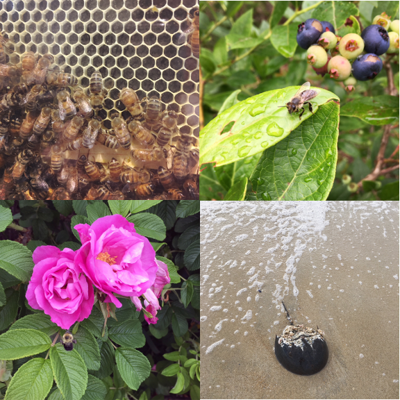 1) Bees, 2) Bees, 3) Bees... 4) and a sea princess.