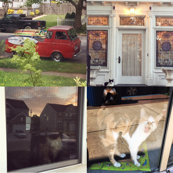 1) The cutest #myfavoritetrucksofasburypark. 2) Funeral home #watchercat. 3) Gazing. 4) and Yawning.