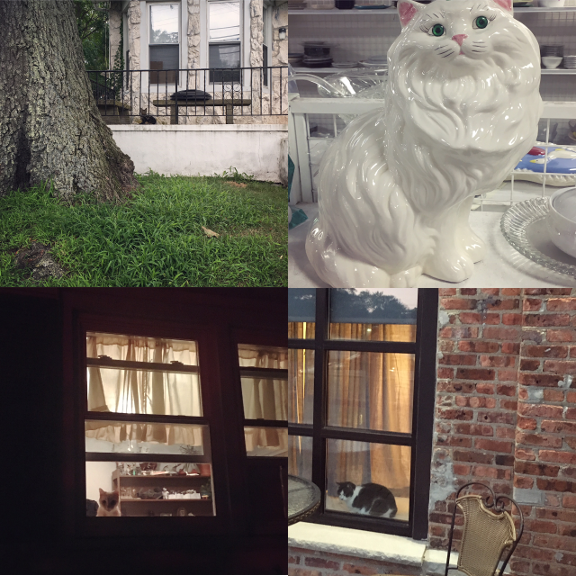 1) There were a lot of hot Summer #watchercats this month. This one was hanging out on Comstock Street. 2) Not a #watchercat but a watching cat none the less. 3) My own baby, watching. 4) Air conditioned on 2nd Ave.