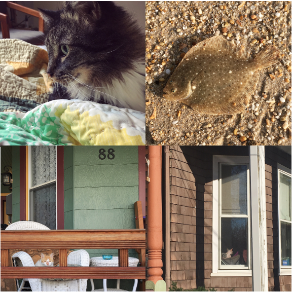 1) Flounder… 2) …flounder. 3) Porch #watchercat, 4) And another warm inside.